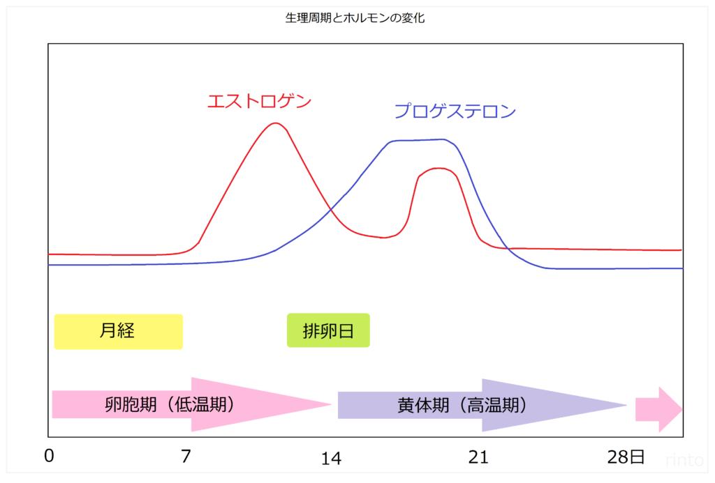月経周期グラフとホルモンバランス
