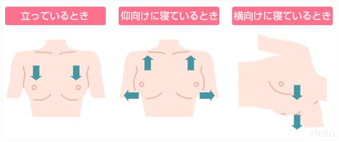 「クーパー靭帯 イラスト」の画像検索結果